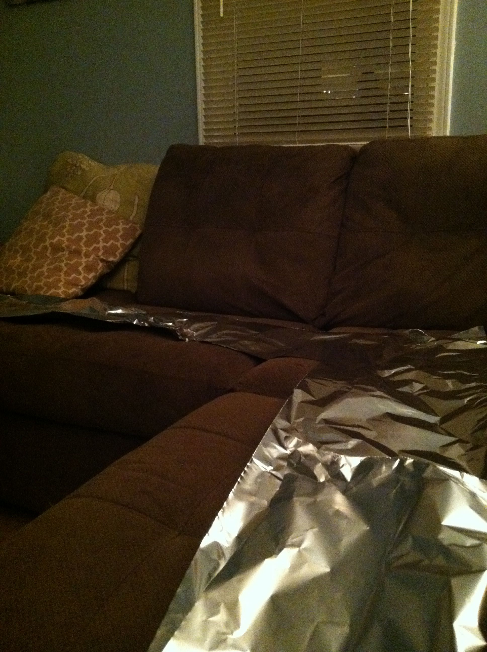 Blind Dog Jumps On Couch : blind, jumps, couch, Don't, Jumping, Couch?, Areas, Dog-proofed., Dogs,, Stuff,