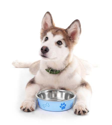 5 Best Dog Food For Huskies 2017 What To Feed Huskies For Top