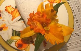 Orquídea Amarela - Lilian Habib