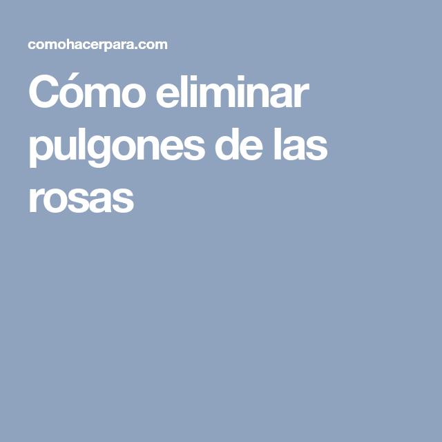 Cómo Eliminar Pulgones De Las Rosas Eliminar Pulgones Pulgon Eliminar