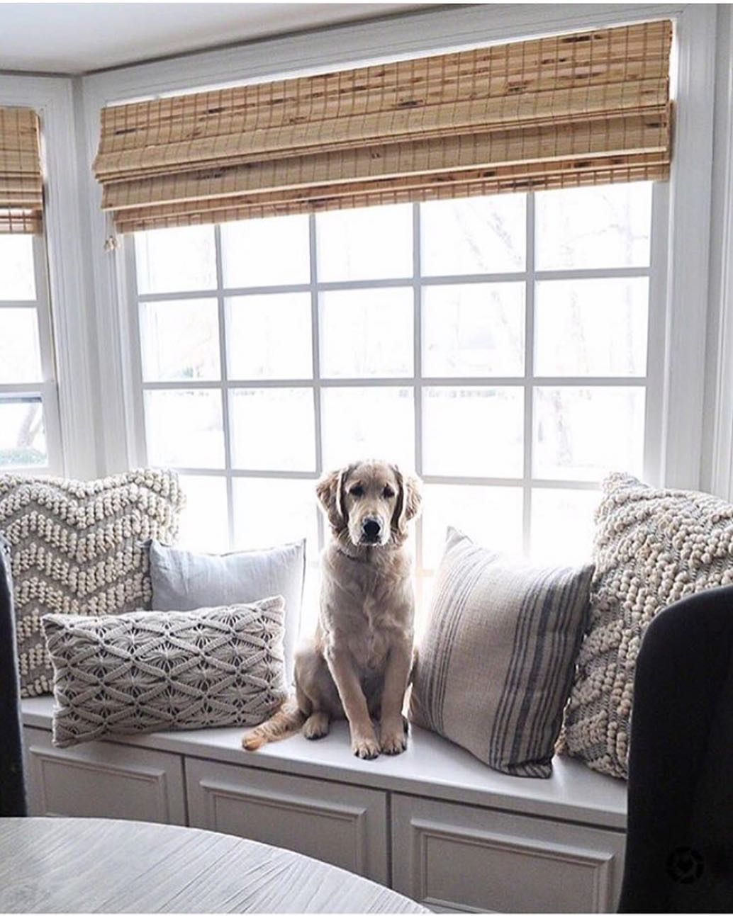 Image May Contain Dog Table Living Room And Indoor Window