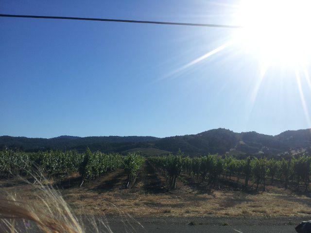 Napa Valley (1)