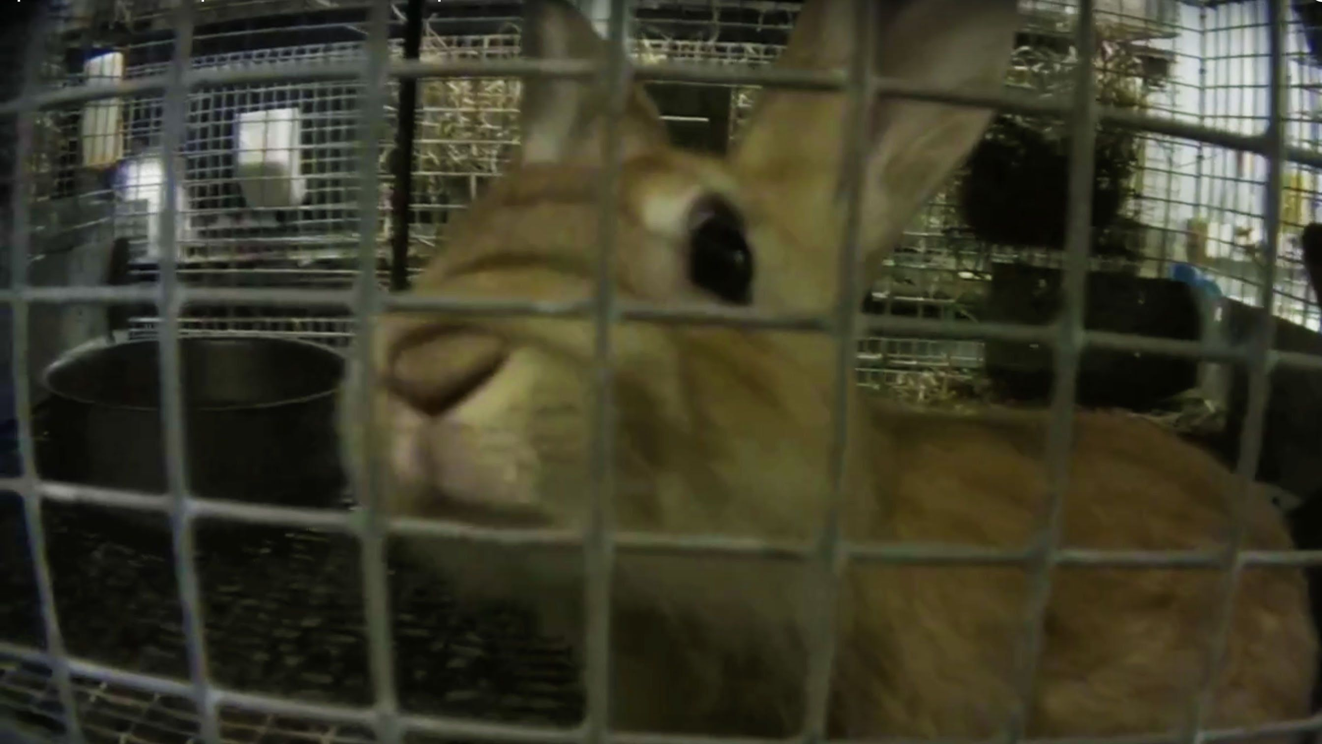 Animals Frozen Alive Crudely Gassed At Petco Petsmart Supplier Mill Petco Animals Petsmart