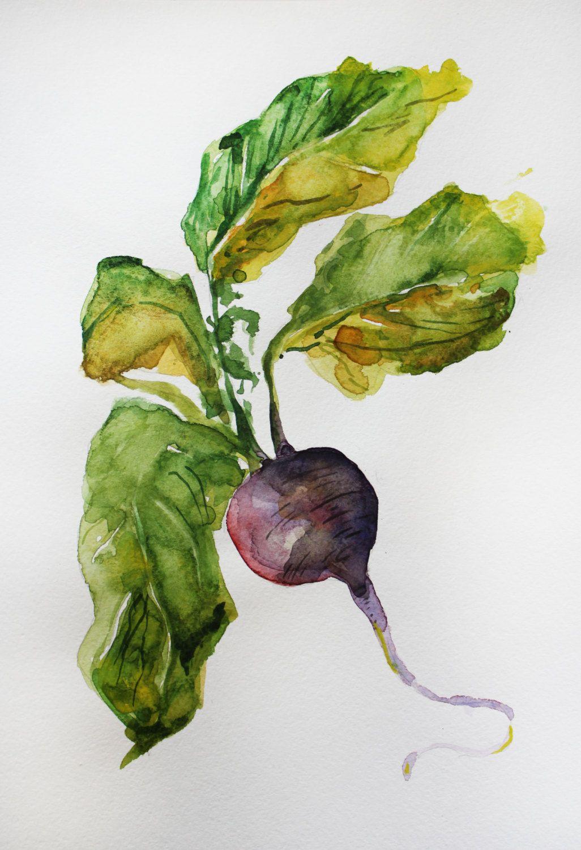 Original Watercolor Beet Painting Kitchen Decor Purple Beet