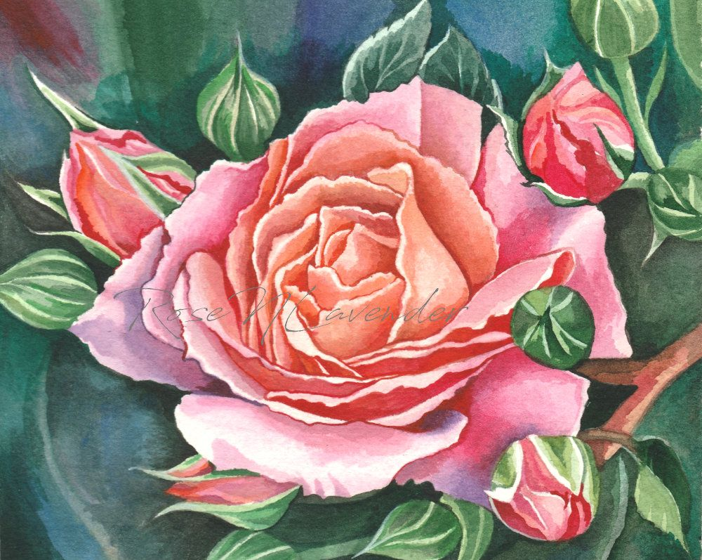 Rose Watercolor Painting Pink Flower Original Painting Gift Etsy Watercolor Rose Tattoos Watercolor Rose Rose Painting