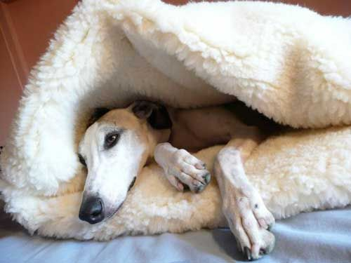 Whippet Pita Bed Products I Love Dogs Dog Coats