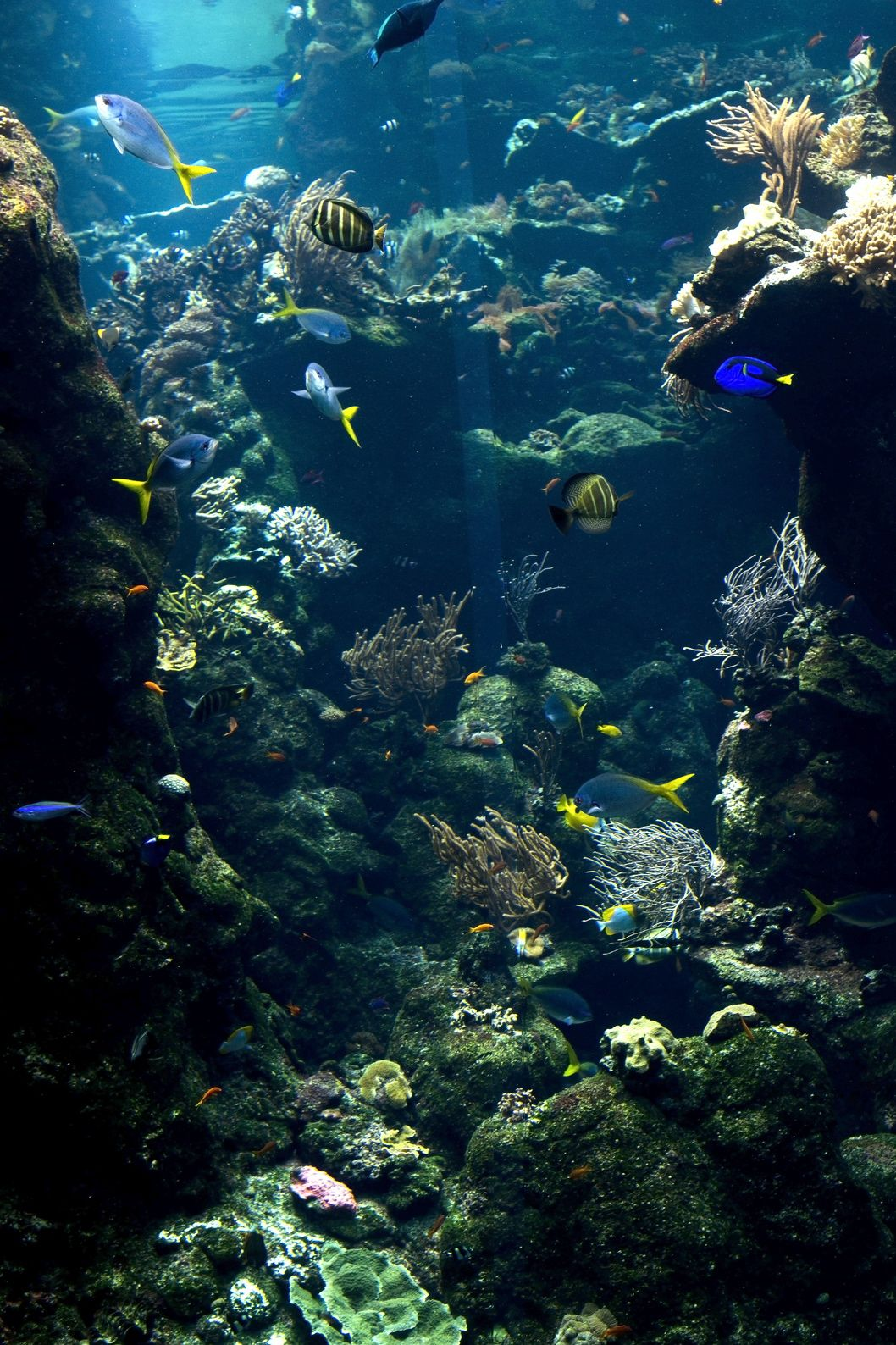 Fons mar breathtaking photography sea ocean pictures sea creatures - Fotos fondo del mar ...