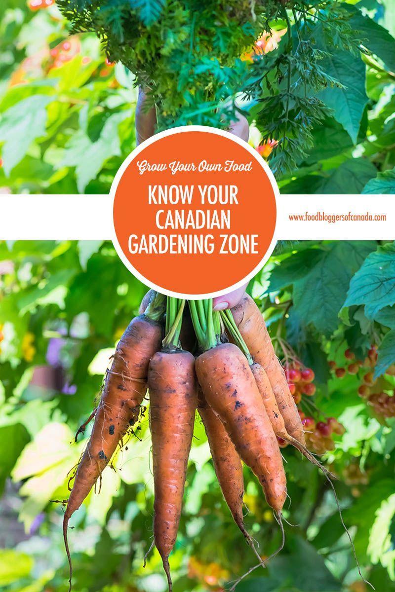 c4e4629f286e65558ef588e67c0acac5 - What Zone Is Thunder Bay For Gardening
