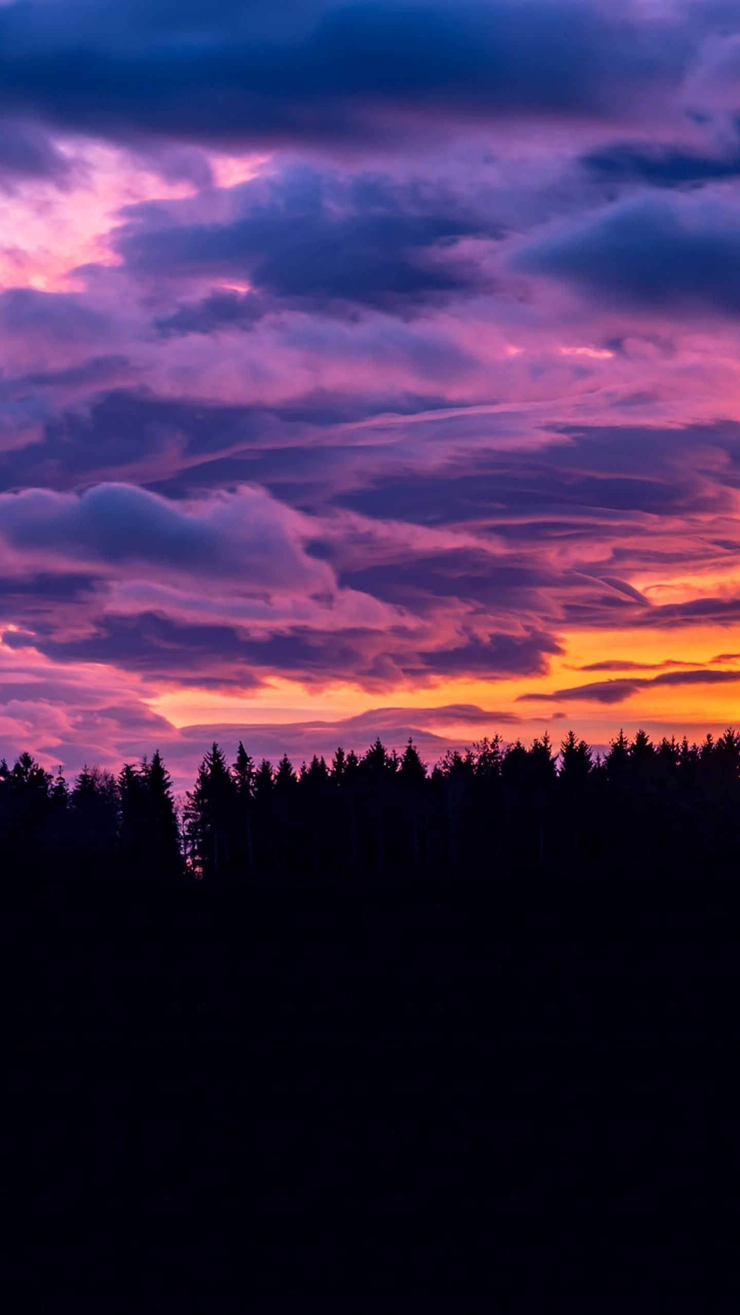 Sunset Clouds Forest 4K, HD Nature Wallpapers Photos and
