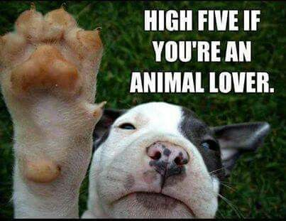 High Five Cute Animals Funny Animals Funny Animal Pictures