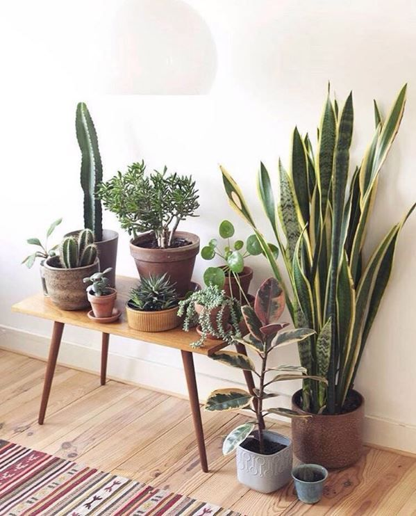 Pin By I M A Houseplant On House Of The Rising Sun Plant Decor