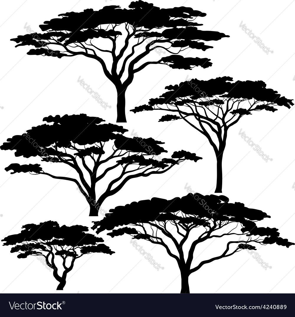Acacia Tree Silhouettes Vector Image On Vectorstock African Tree Tree Drawing Tree Art