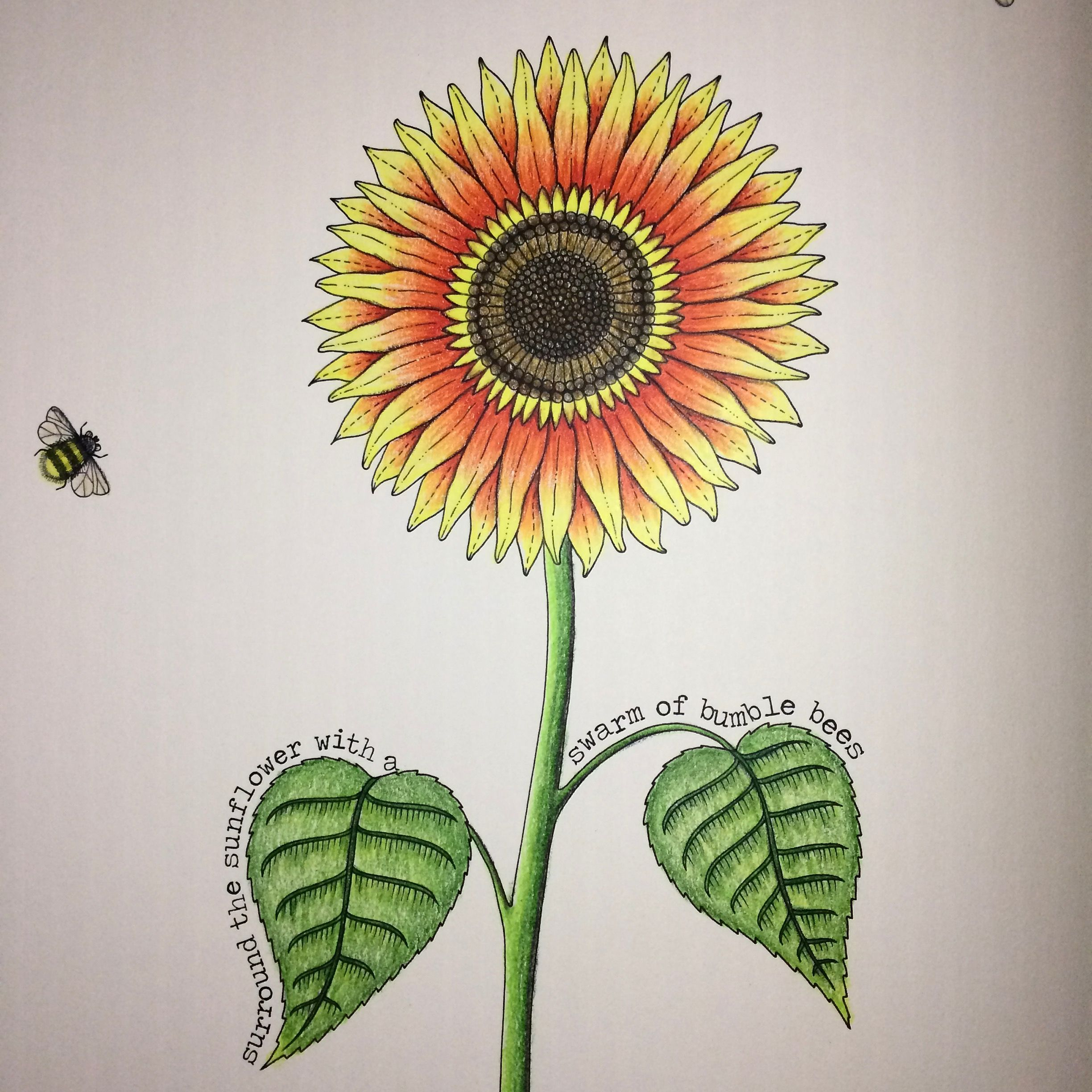Sunflower By Secret Garden Coloring Book