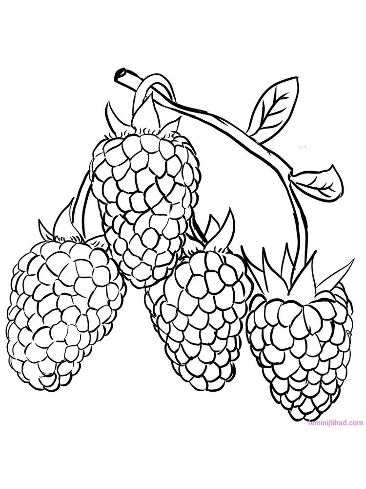 Raspberry Coloring Page Download Raspberries Are The Fruit Of The Family Of Berries Which Have Ver Coloring Pages Fruit Coloring Pages Coloring Pages To Print