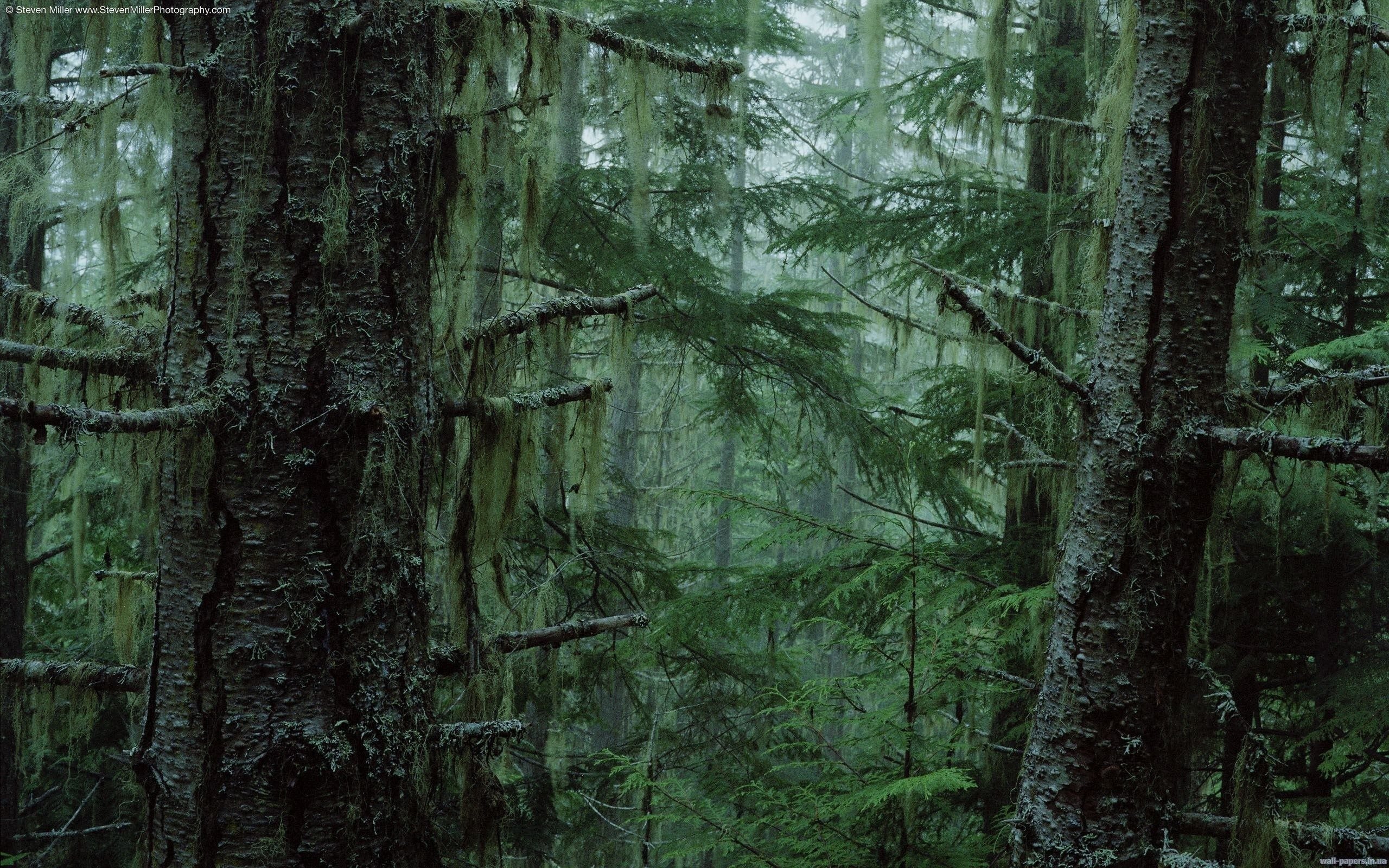 Pin By Moxlonibuskrypt On Moss Forests And Swamps Olympic National Forest Dark Forest Nature Wallpaper