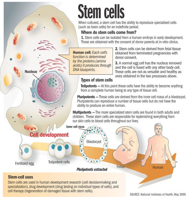 Early 2000 Description Of Stem Cells From Healthy Living