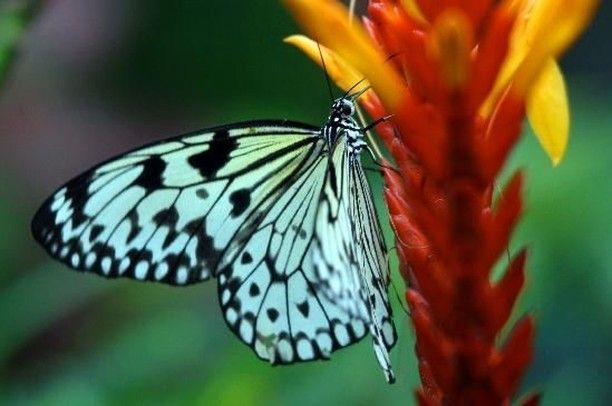 Butterfly Conservatory #hyattkeywest #concierge