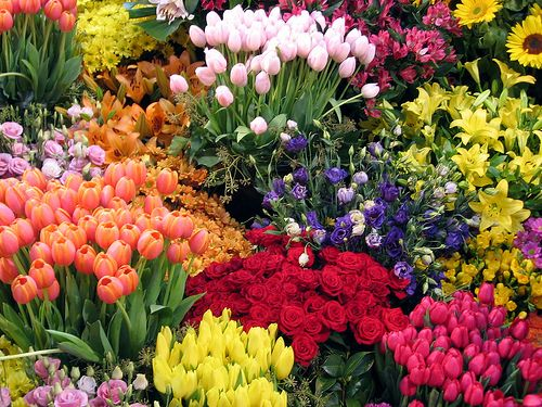 garden flowers. Beautiful Flower Garden Ideas | One Day, A Brilliantly And Fragrant With Attractive Flowers