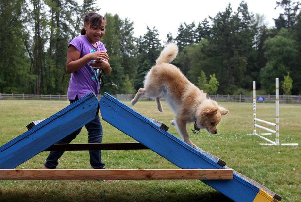 """Jazmin Larry, 9, and her dog """"Mickey"""" check out the agility course set up for opening day at Wapato's new dog park, in Tacoma, July 14, 2012. Wapato's canine park features three separate fenced areas for pets to run off leash - including one reserved just for small dogs.(Janet Jensen/Staff photographer)"""