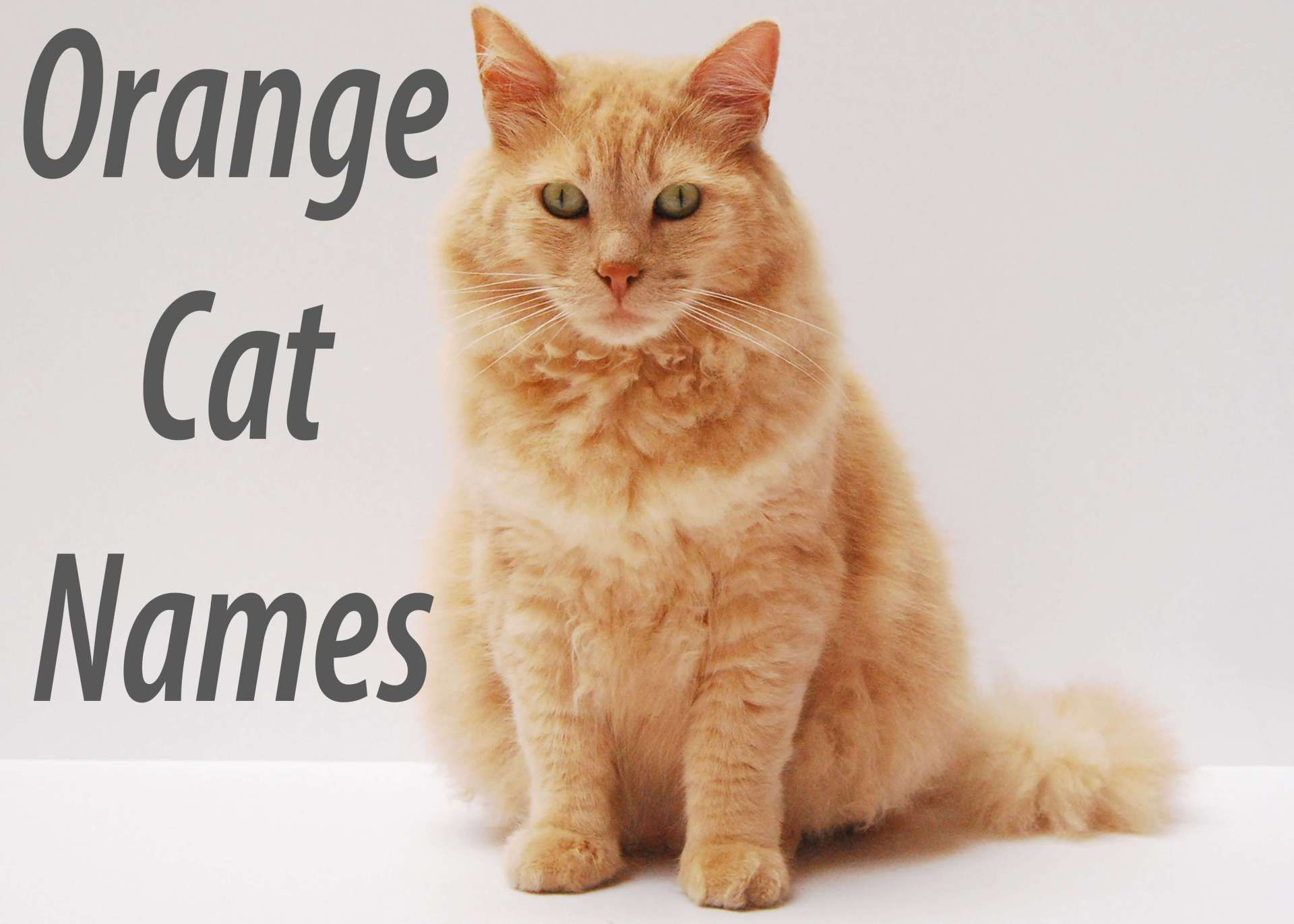 200 Most Popular Orange Names Cat names, Cute cat names
