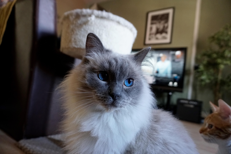 I wish I was half as beautiful as my cat.
