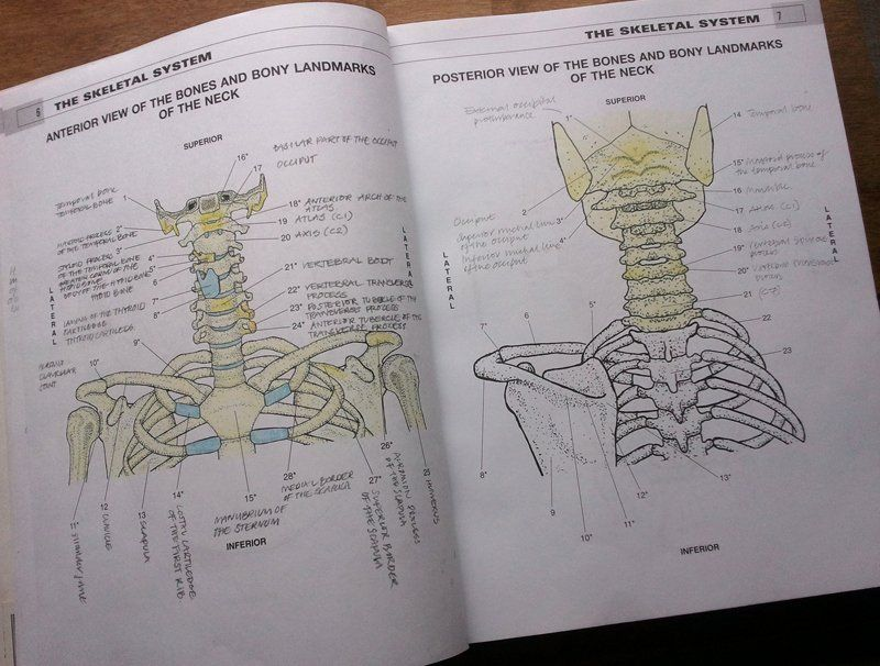 The Physiology Coloring Book Lovely The Physiology Coloring Book Pdf Developersinfinite Anatomy Coloring Book Kids Coloring Books Coloring Books