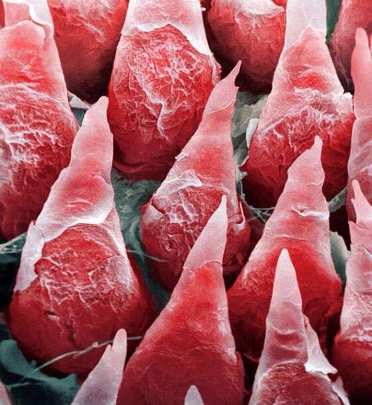 rött kött amning