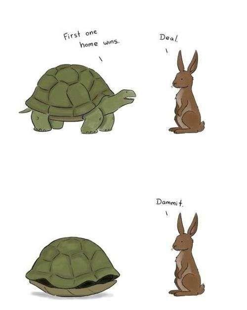 first home wins   turtle vs rabbit  turtle win, rabbit fail