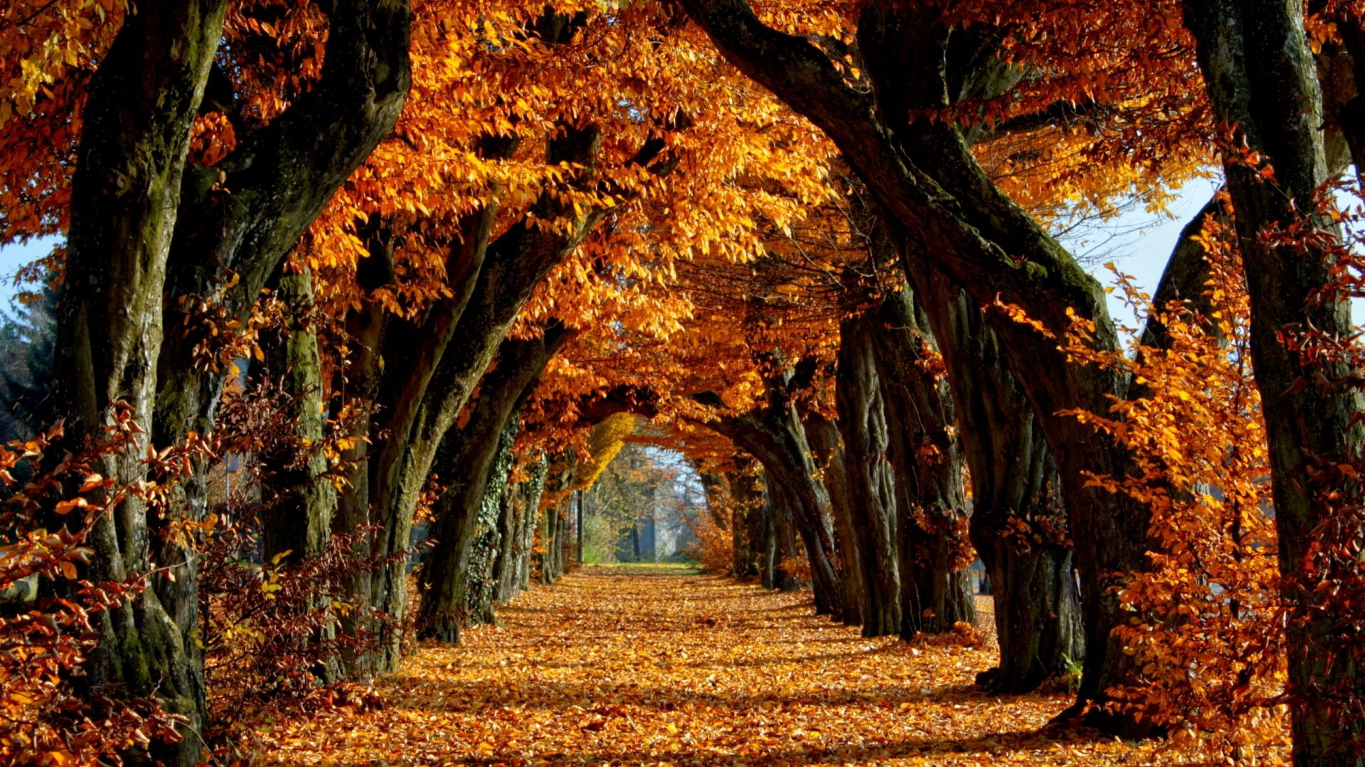 Download Wallpaper 1920x1080 Avenue Autumn Trees Long Term Leaves Gold Path Full Hd 1080p Hd Backgr Desktop Wallpaper Fall Autumn Nature Nature Wallpaper