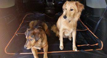 What Is The Best Dog Odor Remover For A Smelly Dog?... A Dog Deodorant Spray? A Dog Odor Eliminator? Or A Homemade Dog Deodorizer?