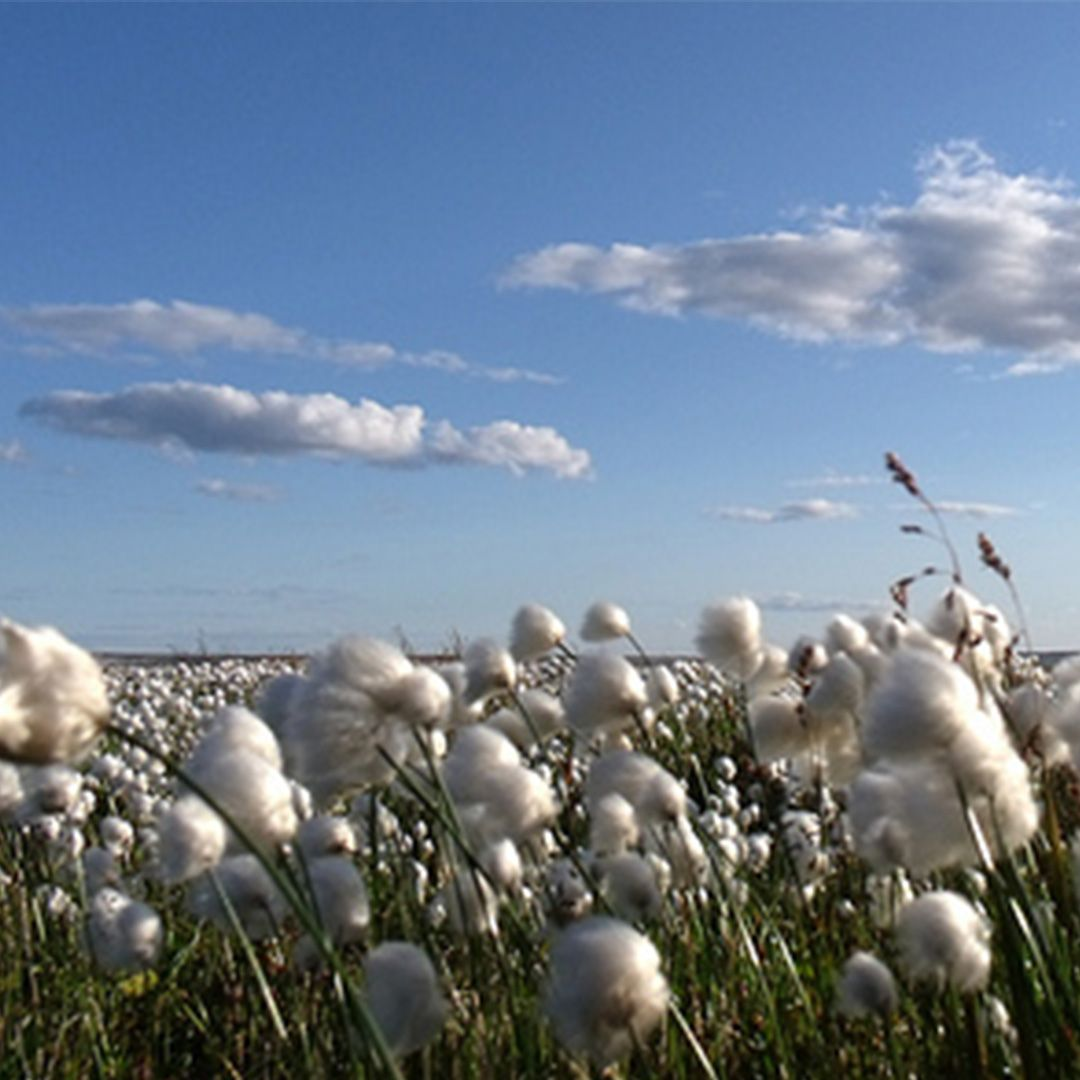 Not all cotton is equal. With 4 types of commercially grown cotton, American grown Supima cotton is known to be the softest and most luxurious. It currently only makes up 3% of annual cotton production.