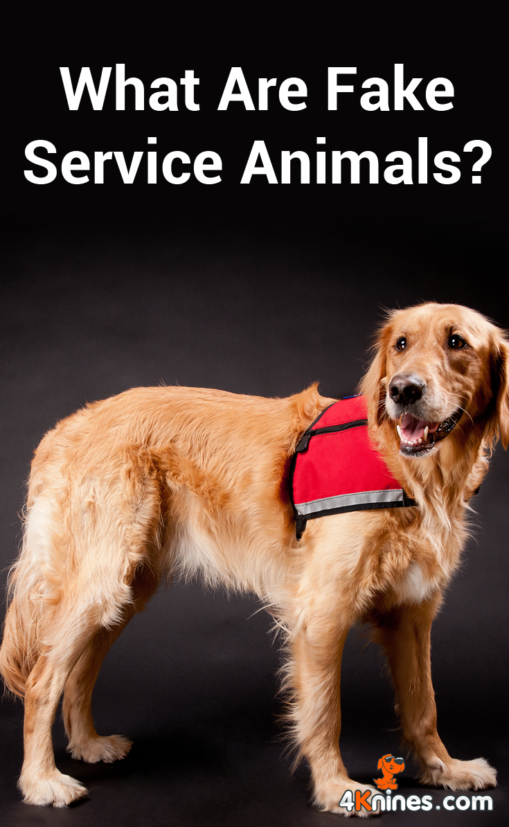 What Are Fake Service Animals Service Dogs Quotes Service Animal Golden Retriever Service Dog