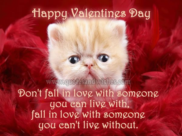 Cute, Funny, Love, Romantic Valentines Day Love Quotes And Wishes ...  Animal WallpaperCat ...