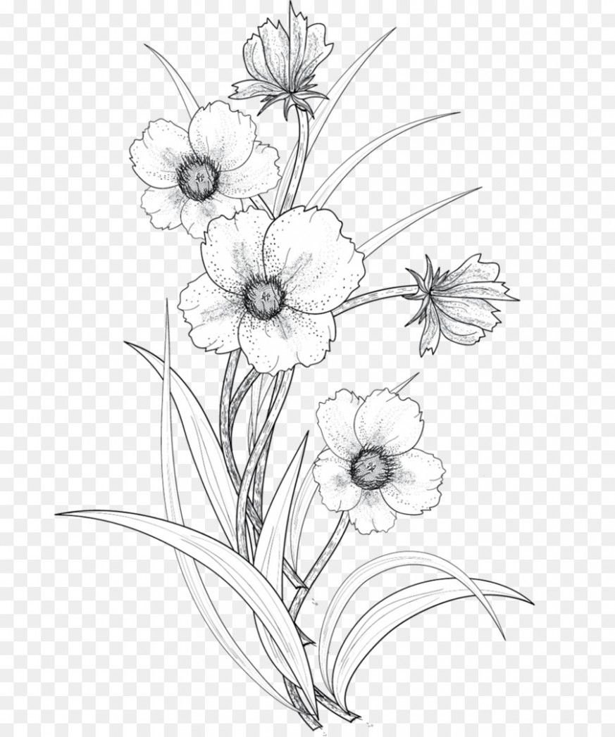 The Hidden Agenda Of Flower Drawing Png Flower Drawing Png Https Ift Tt 35tn4xh Flower Line Drawings Flower Drawing Transparent Flowers
