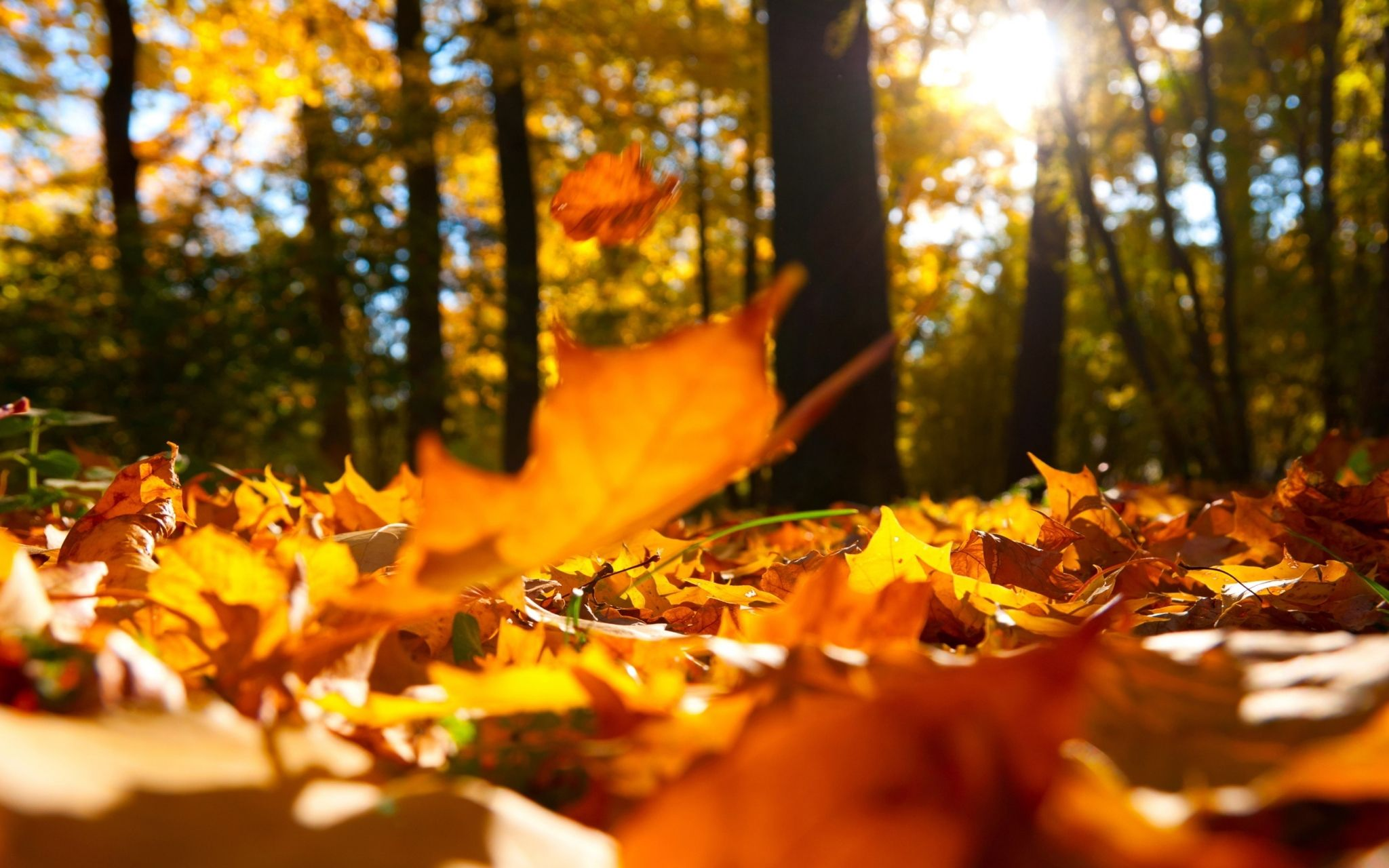 autumn hd widescreen wallpapers for laptop Autumn leaves
