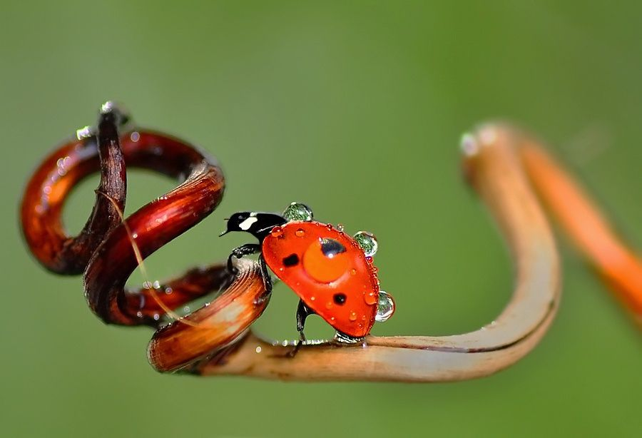 Photograph Red & Drop by Mustafa Öztürk on 500px