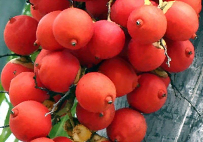 Manfaat Buah Apel Pir