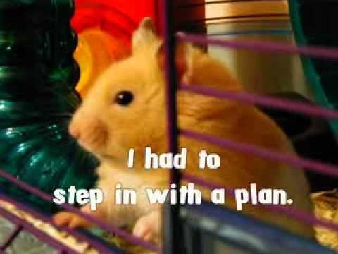 Hamster com movies