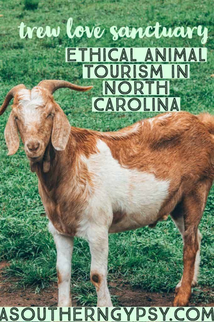 Trew Love Rescue + Sanctuary North carolina, Tourism