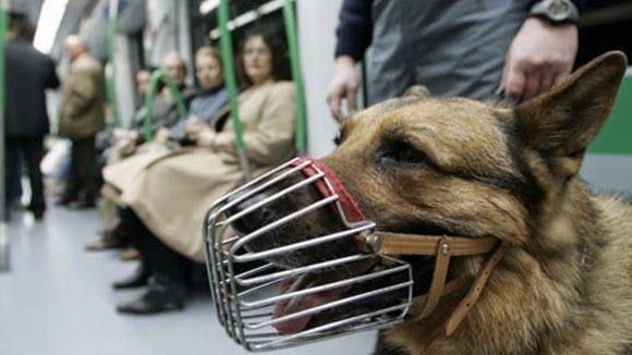 SandRamirez contra el maltrato animal. • www.luchandoporellos.es: LOS PERROS DEL METRO: ESCLAVOS DE 4 PATAS.