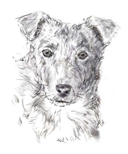 the finished dog sketch - H South, licensed to About.com, Inc.