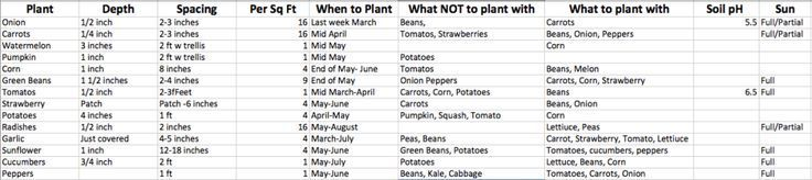 Pin on companion planting