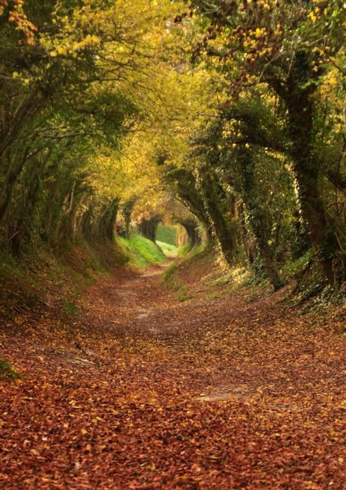 eaf40b27d Túnel de árvores - Caminho para Halnaker Mill (West Sussex - Inglaterra) |  Tunnel