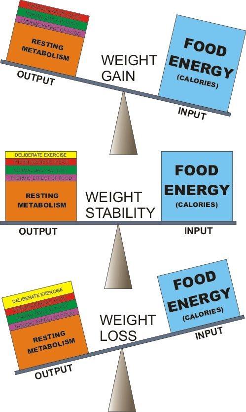 Energy Balance Iifym Pinterest Weight Loss Medical Weight