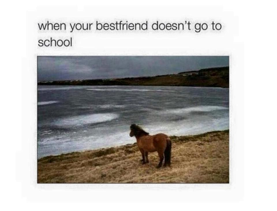 Funny Memes For Your Best Friend : Follow for more amazing pins✨@jackyxvaldez { best friends
