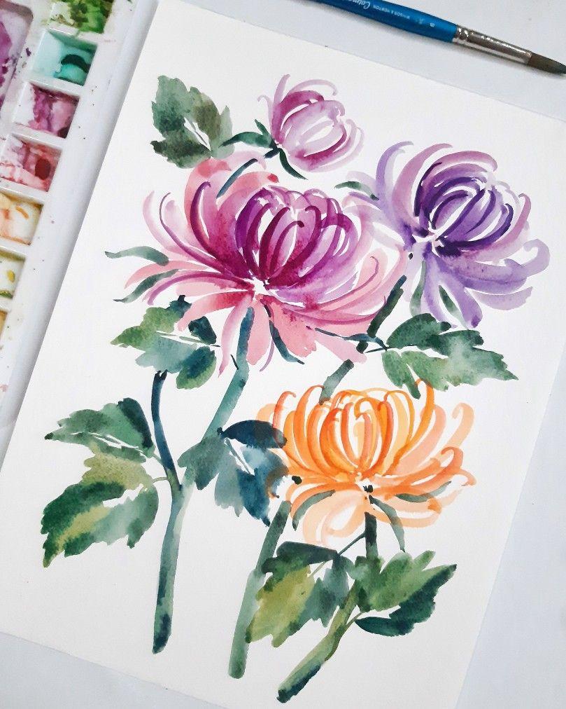 Chrysanthemum In 2020 Chrysanthemum Flower Drawing Chrysanthemum Drawing Chrysanthemum Painting