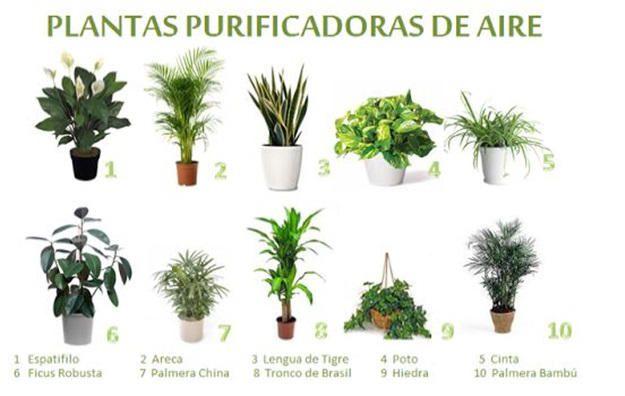 Plantas purificadoras de aire plantas plantas - Plantas de interior que purifican el aire ...