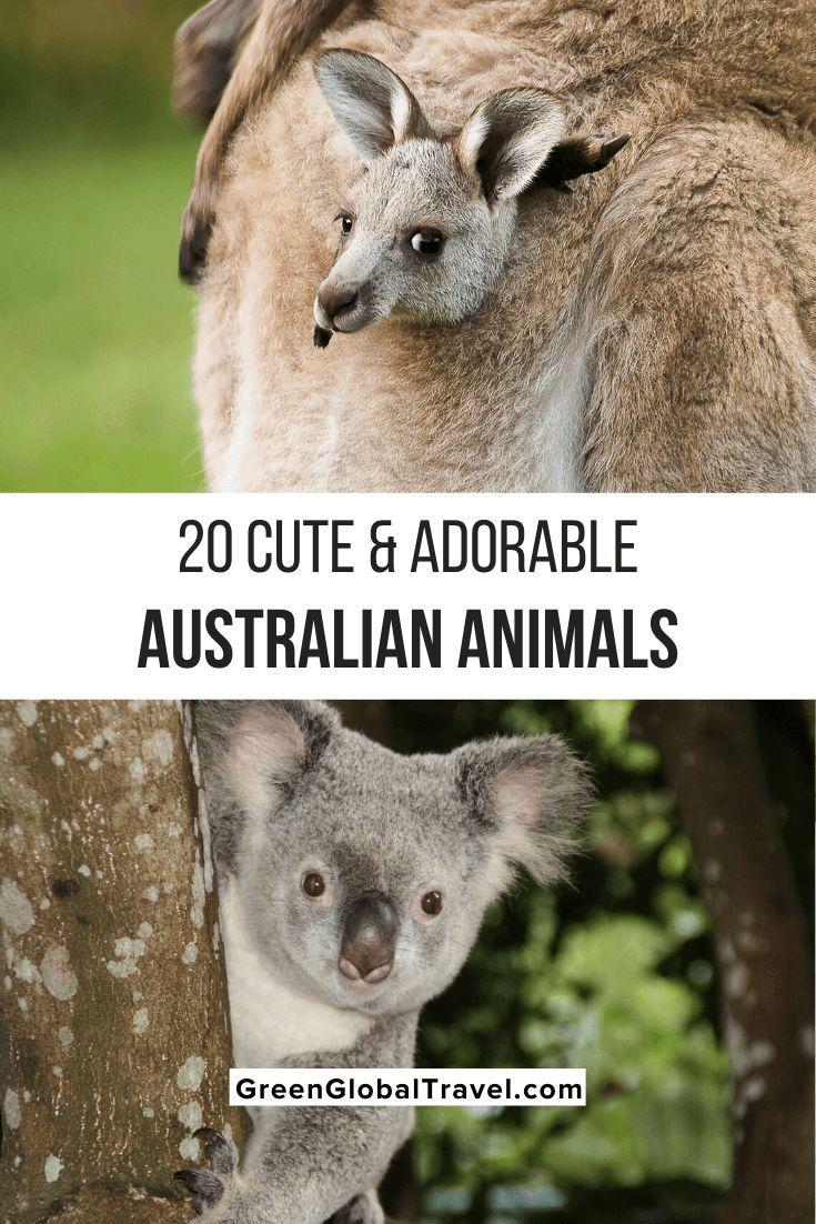 10++ Crazy animals in australia images