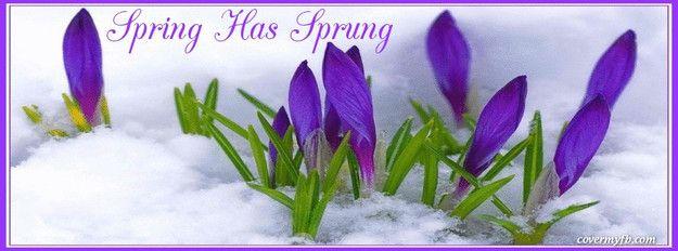 Spring Has Sprung Facebook Cover