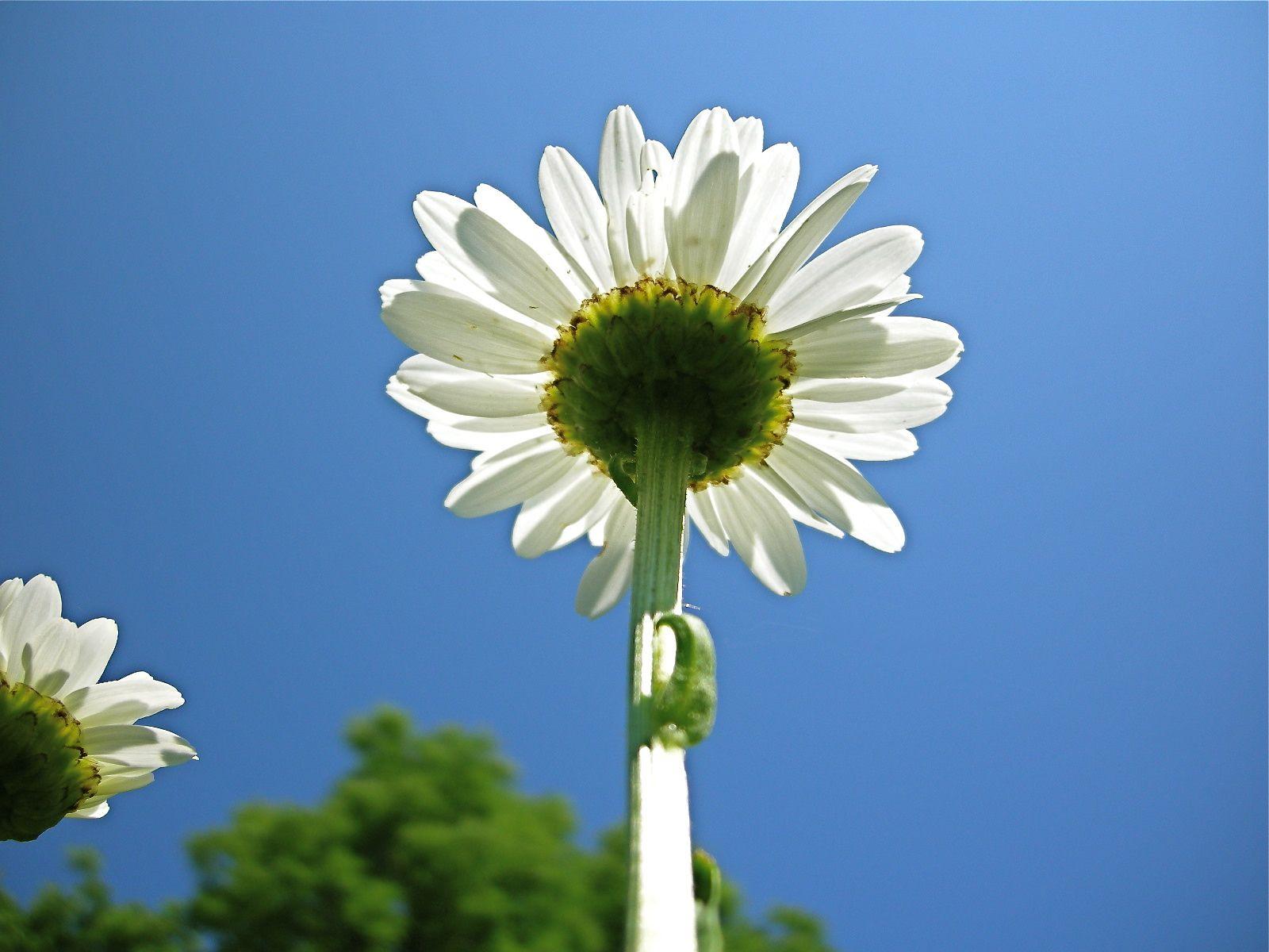 Upsy Daisy Grow It Pinterest
